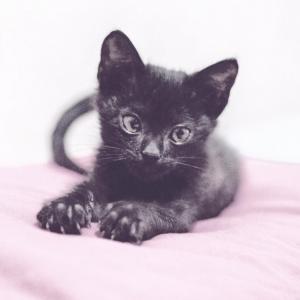 coco-kedi-canim